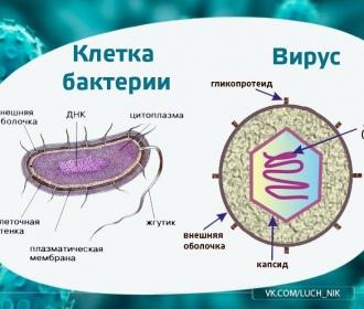 Микробы. Бактерии. Вирусы. Общее и отличие. Виды. Лечение. Препараты