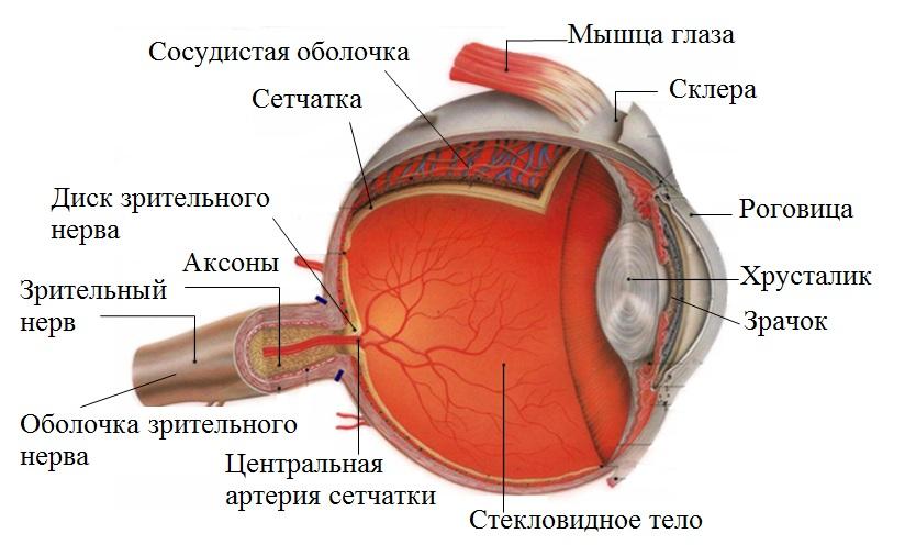 киста зрительного нерва