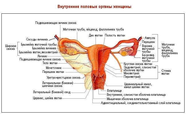 """Женское здоровье / Вопросы медицины - ПО """"Луч-Ник"""""""