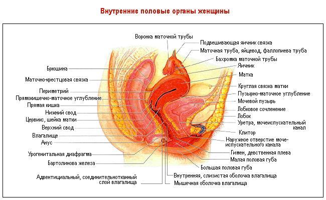 zhenskaya-vlagalishe-opisanie