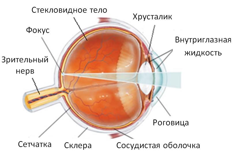 Скупка очков для зрения