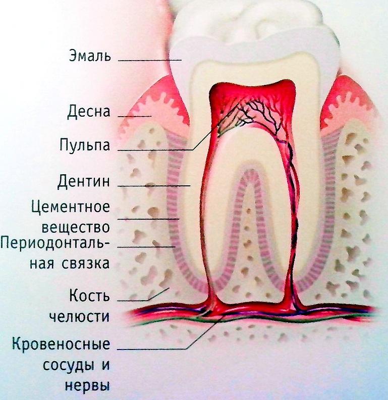 Что может помочь от боли в зубе в домашних условиях